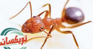 افضل طريقة للتخلص من النمل