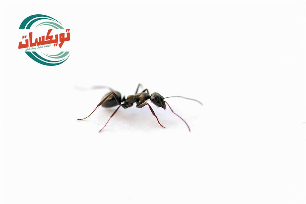 حشرات