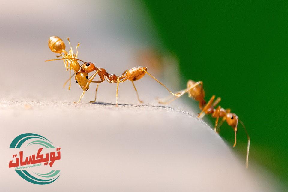 شركةمكافحةالنملالابيضبالنعيرية