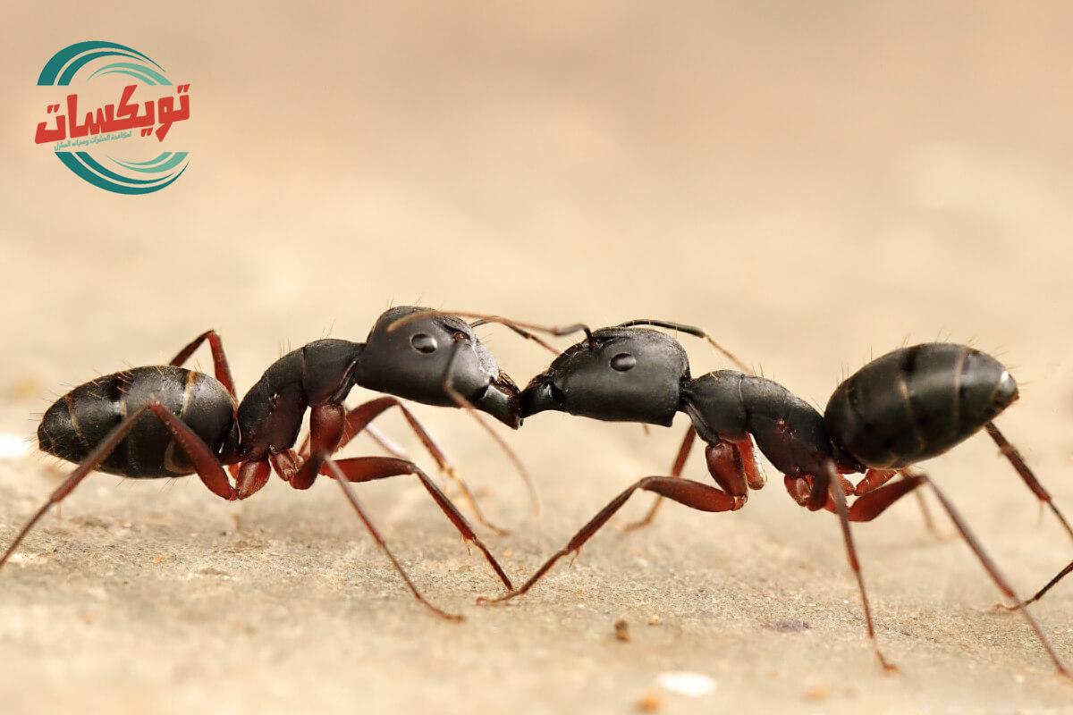كيف تقتل النمل