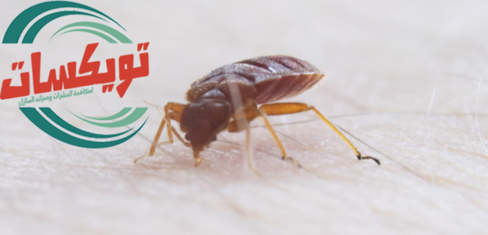 Photo of القضاء على البق بالريحان