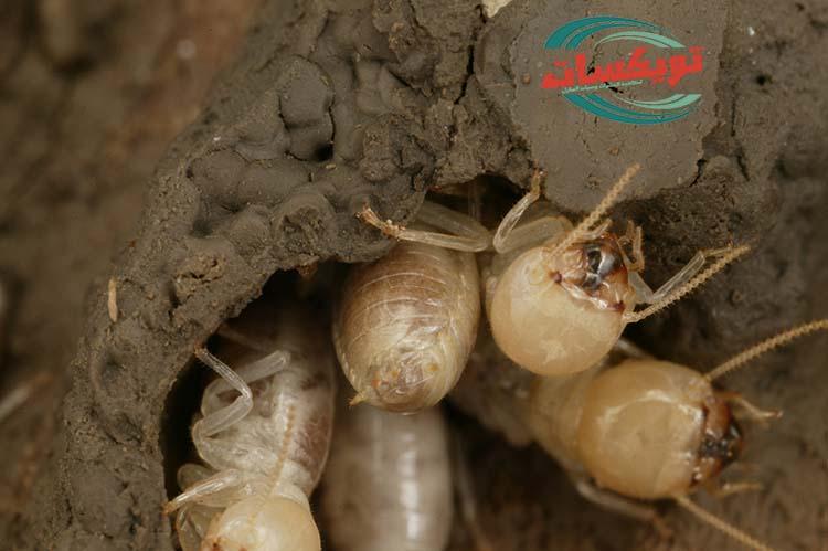شركة مكافحة النمل الأبيض بالاحساء