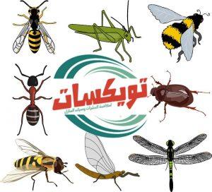حماية المنزل من الحشرات