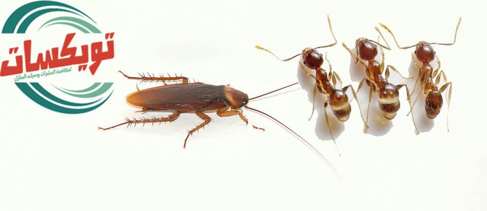 انواع حشرات المنزل
