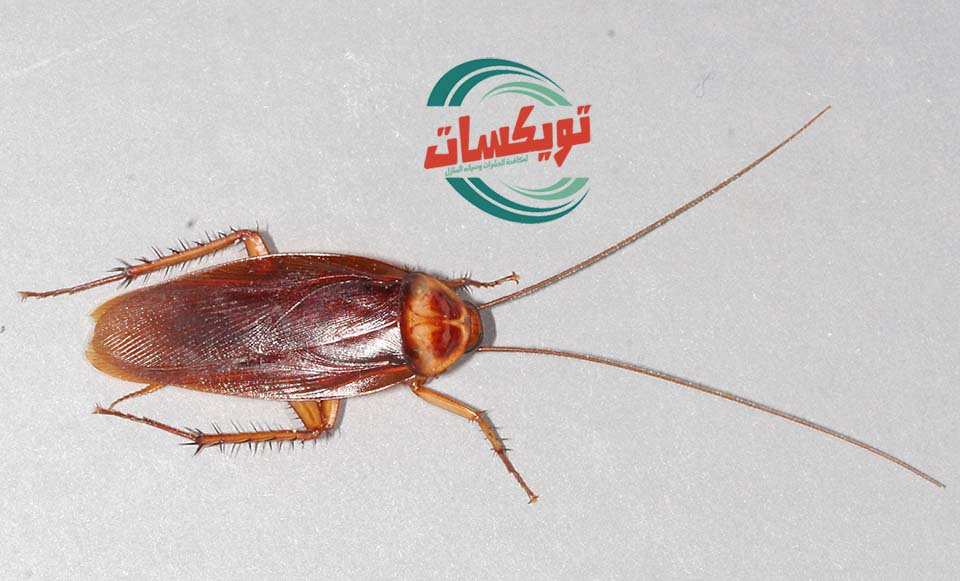 شركة مكافحة الحشرات بجازان