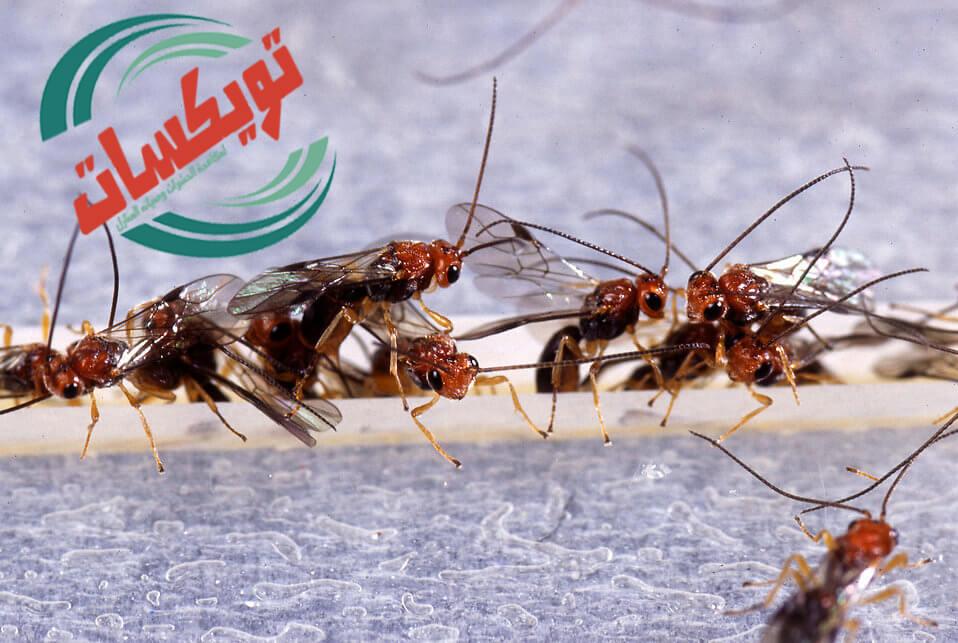 شركة مكافحه حشرات بسكاكا