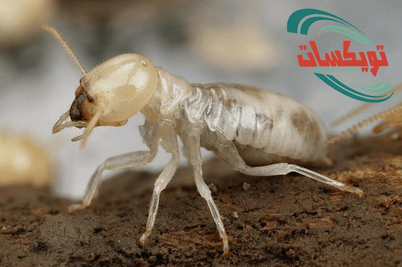 شركة مكافحة النمل الابيض بغرب الرياض