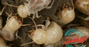 شركة مكافحة النمل الابيض بالزلفي