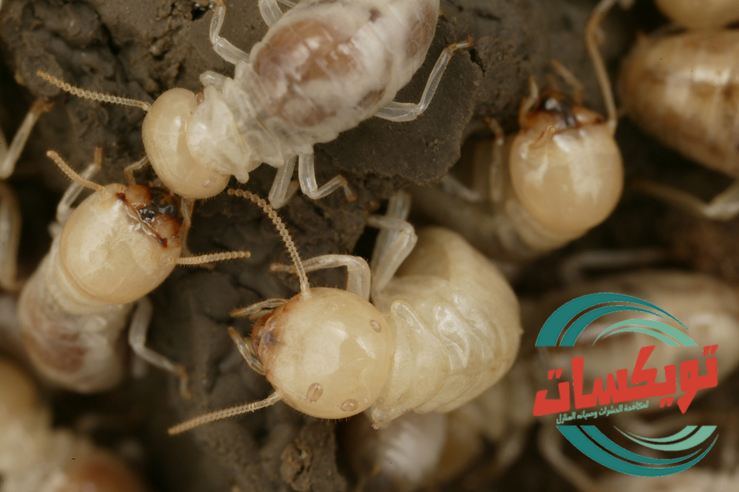 Photo of شركة مكافحة النمل الابيض بالزلفي