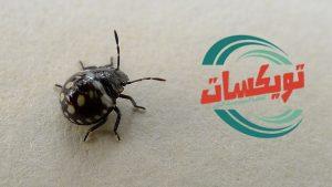 شركة مكافحه حشرات بالرس