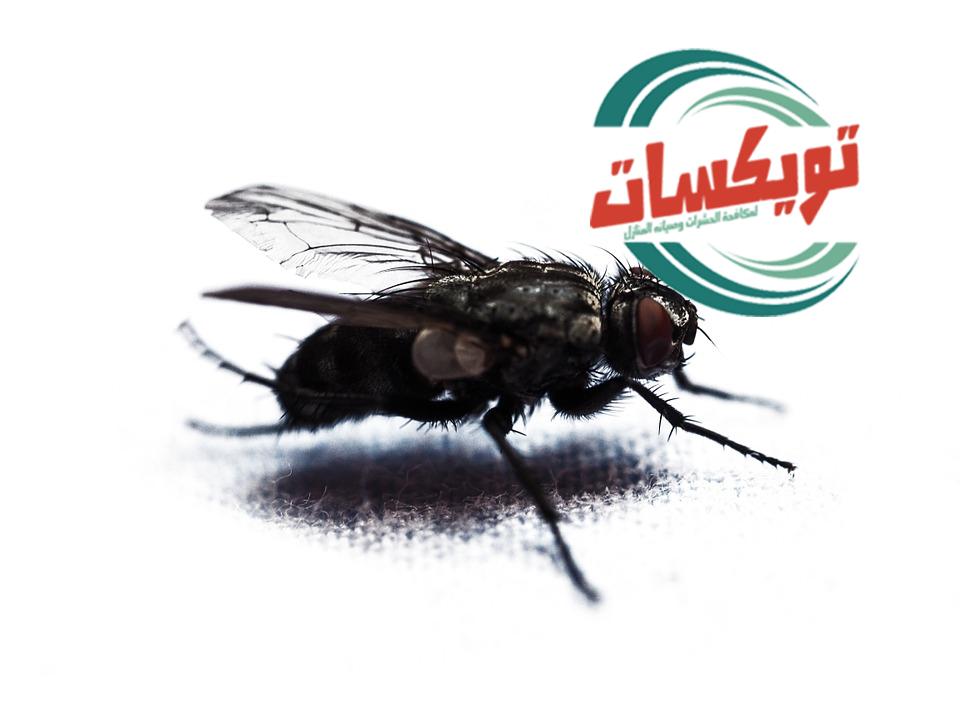 شركة مكافحه حشرات بالزلفي