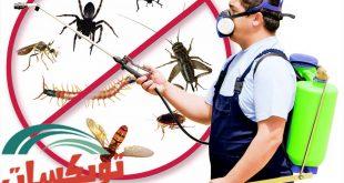 شركة مكافحه حشرات بظلم