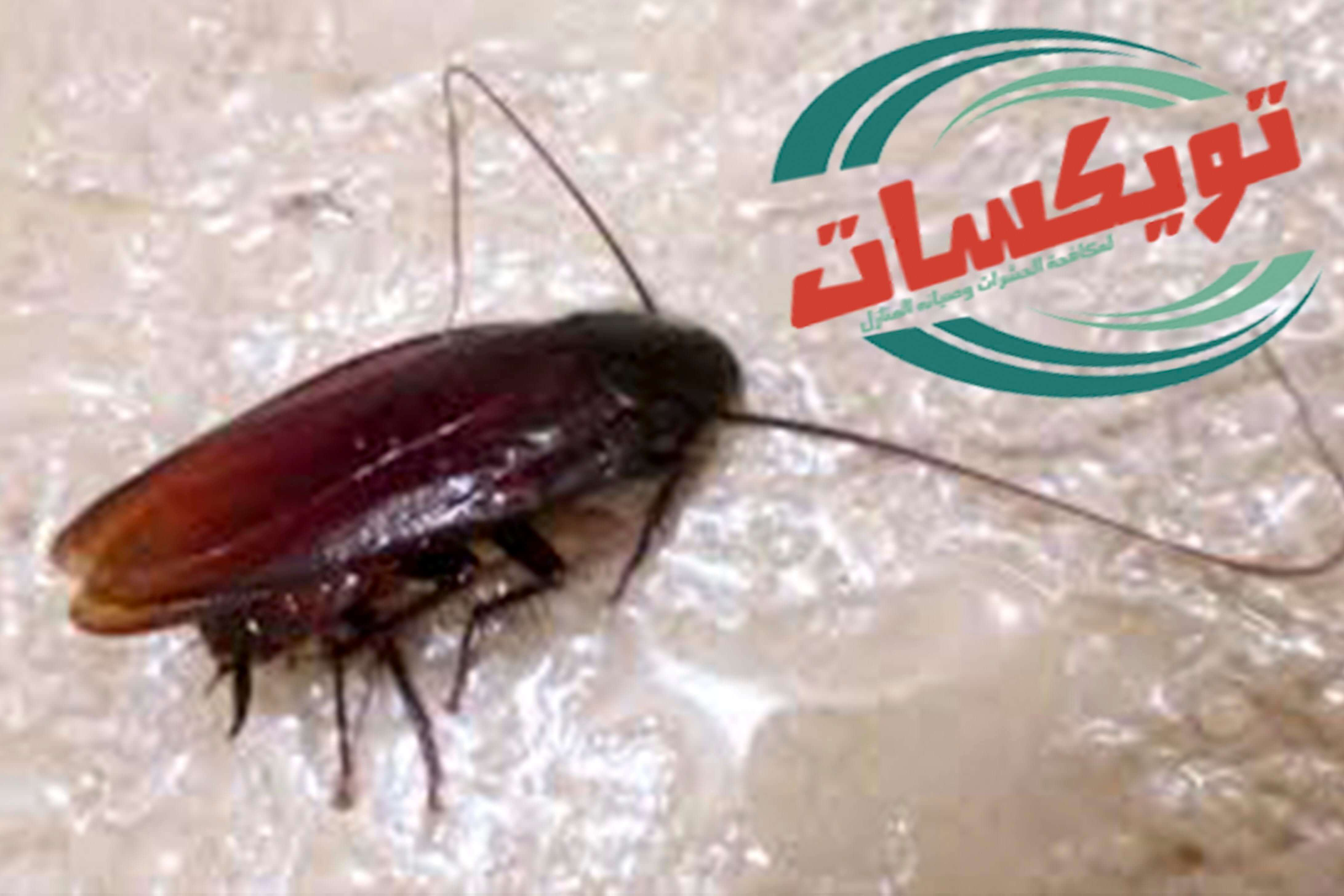 شركة مكافحة الصراصير بشرق الرياض