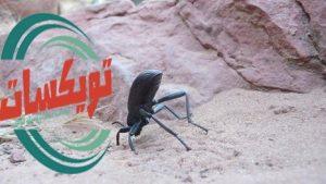 شركة مكافحه حشرات برماح