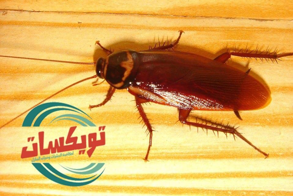 شركة مكافحة الصراصير بغرب الرياض