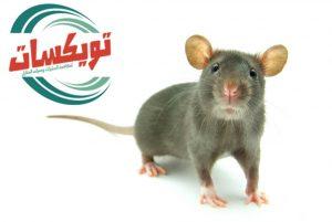شركة مكافحة الفئران بسكاكا