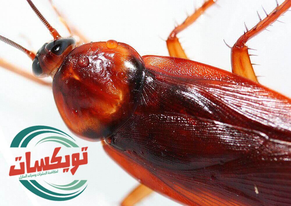 شركة مكافحه الصراصير بالدوادمي