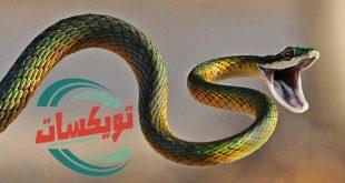 شركة مكافحة الثعابين بغرب الرياض