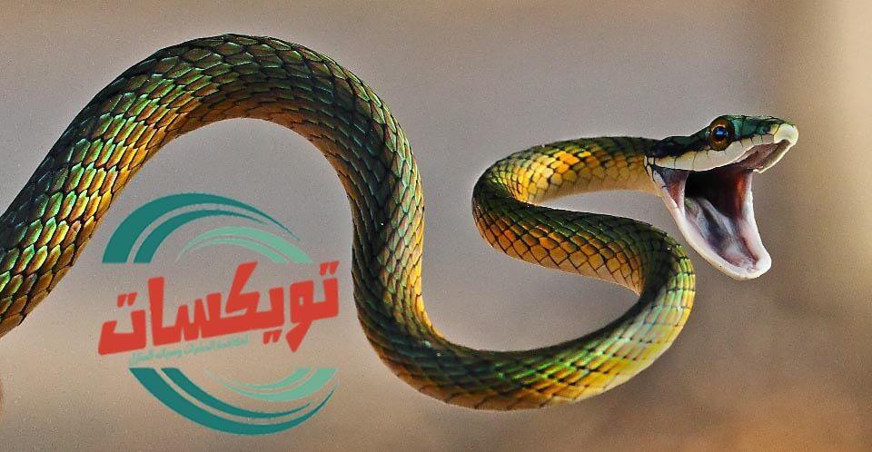 Photo of شركة مكافحة الثعابين بغرب الرياض