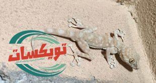 شركة مكافحة برص بشرق الرياض
