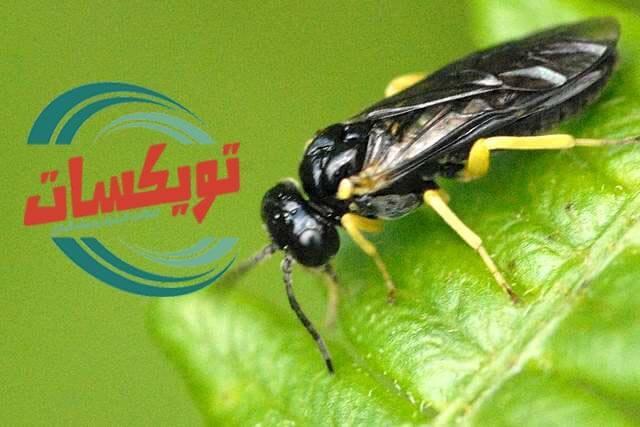 شركة مكافحة حشرات بالرويضه