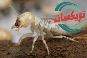شركة مكافحة النمل الابيض براس تنوره