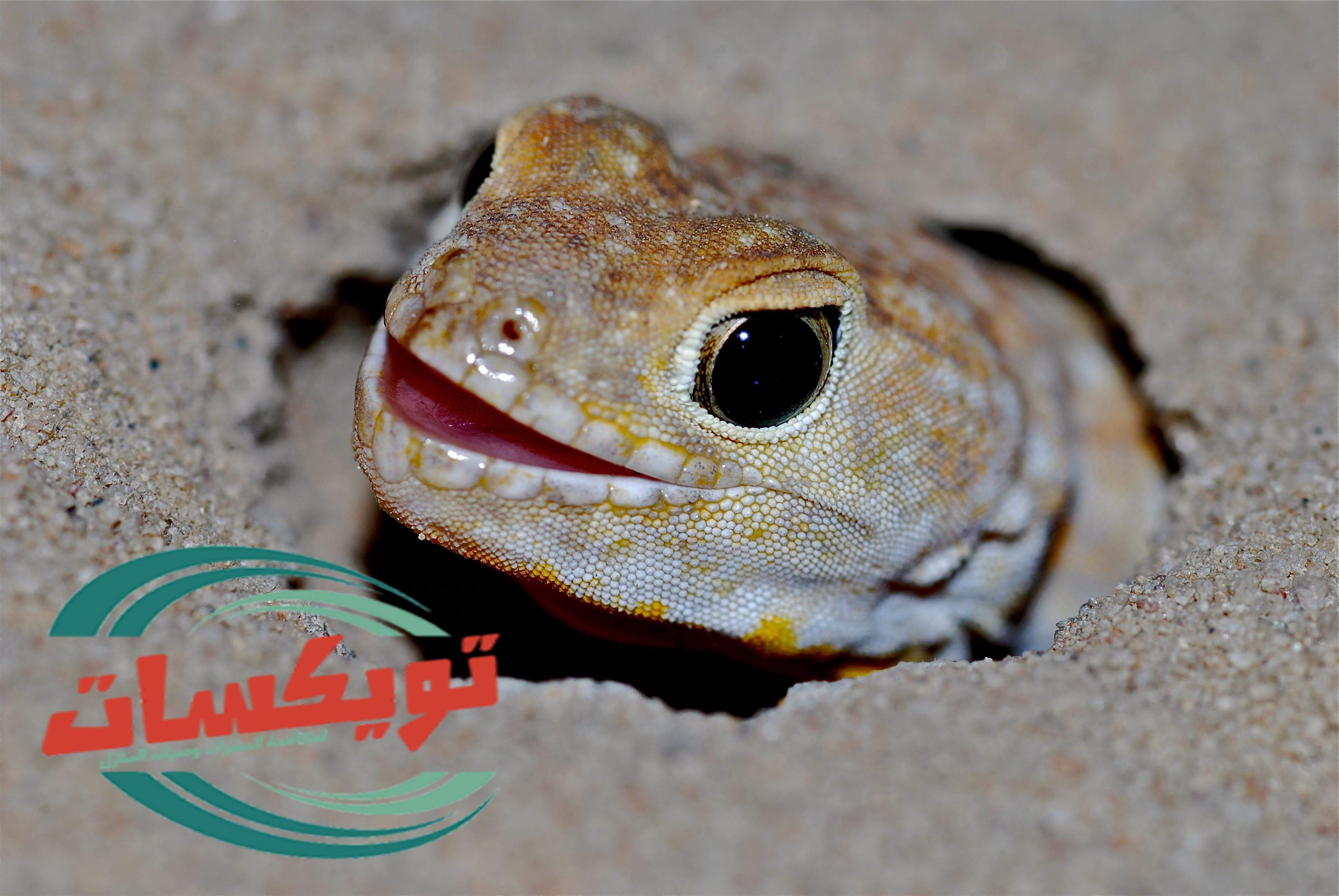 Photo of شركة مكافحة برص بغرب الرياض