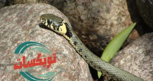 شركة مكافحة الثعابين بالزلفي