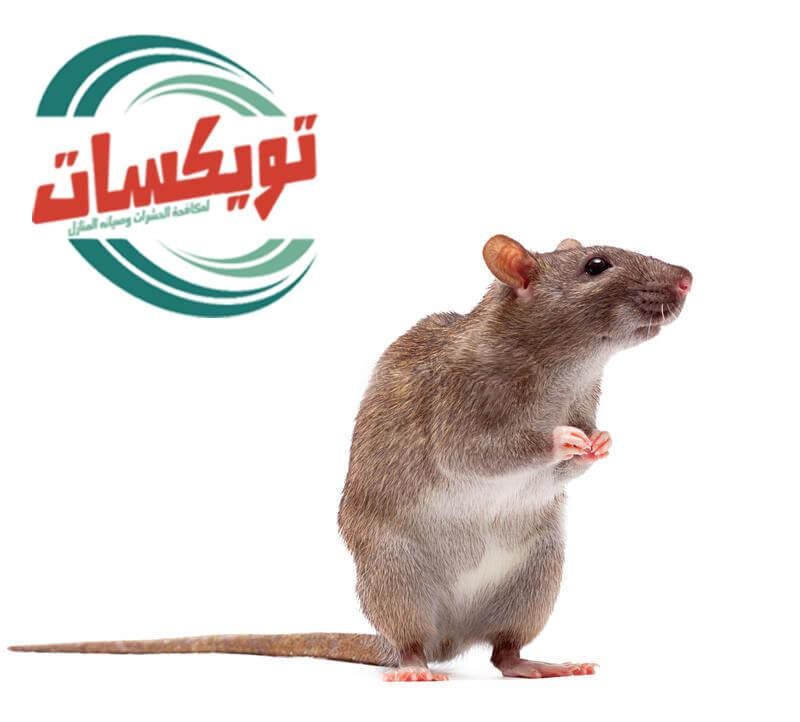 شركة مكافحة الفئران بالزلفي