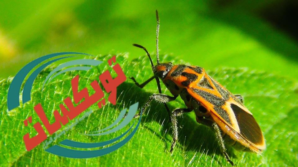 Photo of شركة مكافحه حشرات برماح