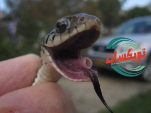 شركة مكافحة الثعابين برماح
