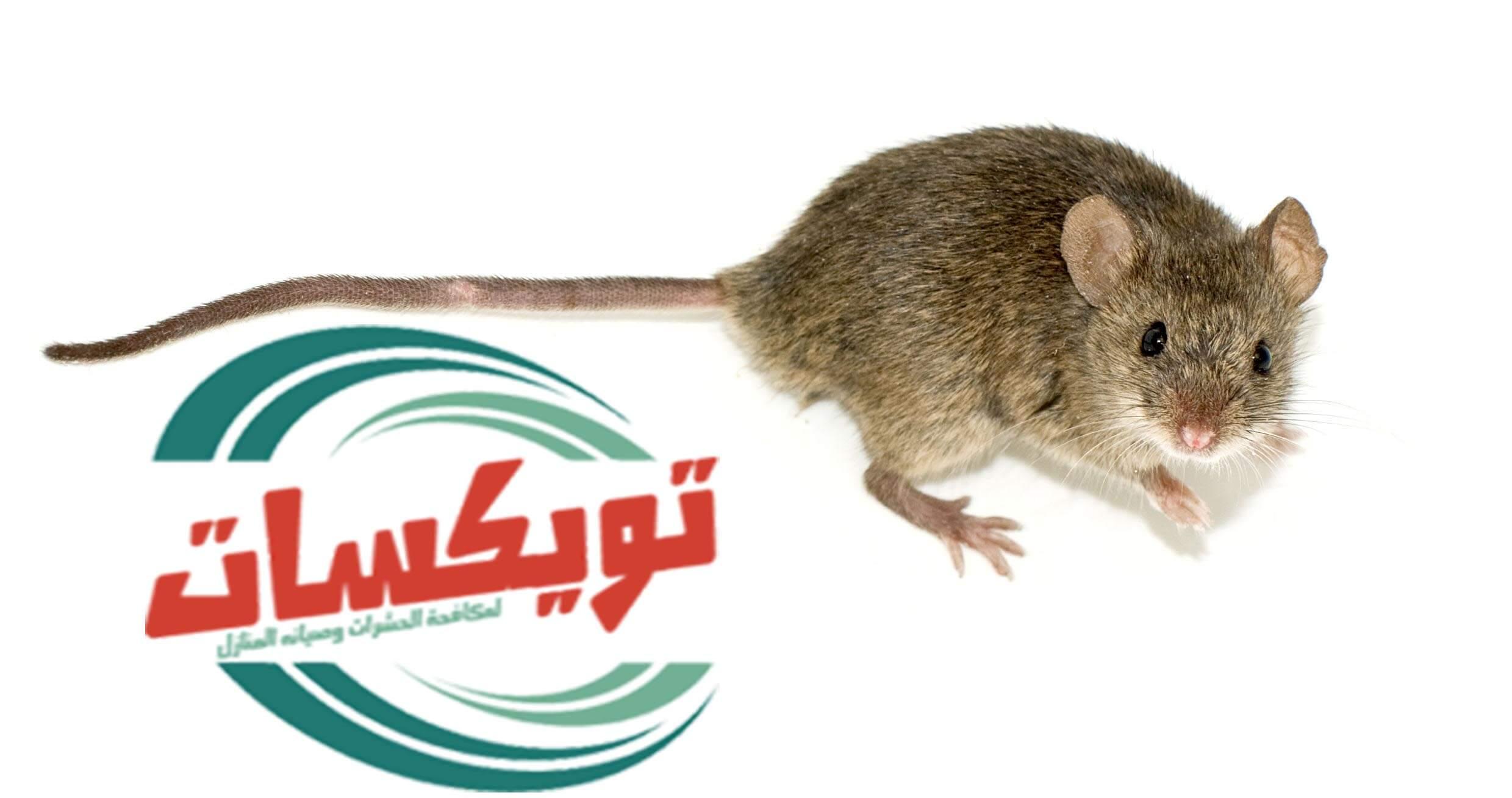 شركة مكافحة الفئران بشرق الرياض