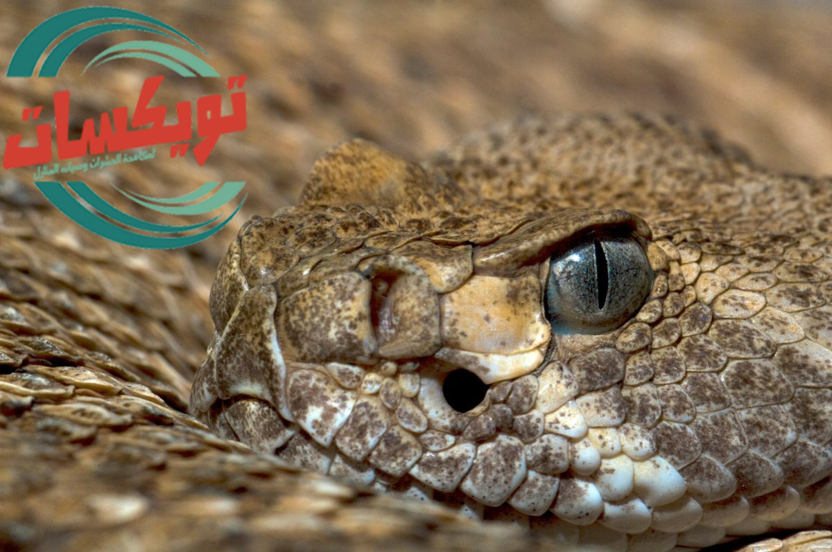 Photo of شركة مكافحة الثعابين بسكاكا