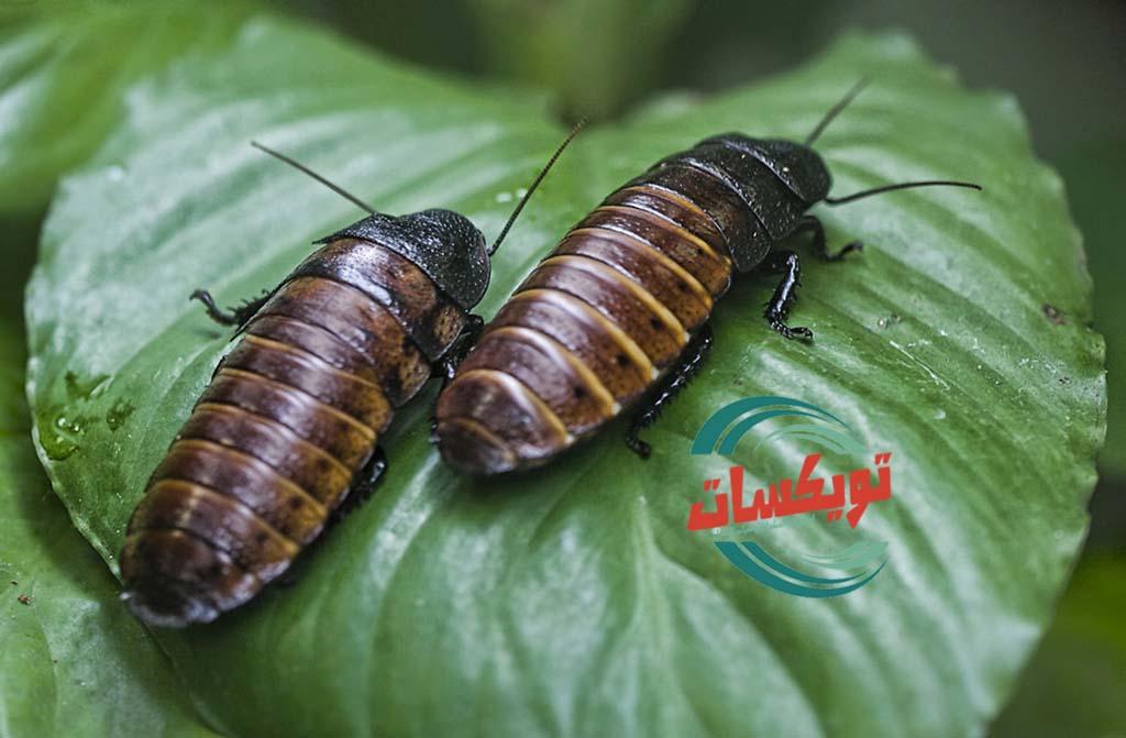 Photo of شركة مكافحه حشرات بالمجمعة