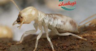 شركة مكافحه النمل الابيض بالمزاحمية