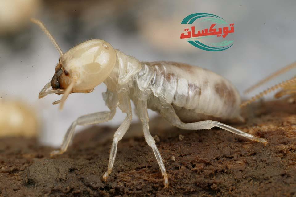 شركة مكافحه النمل الابيض بالمزاحميه