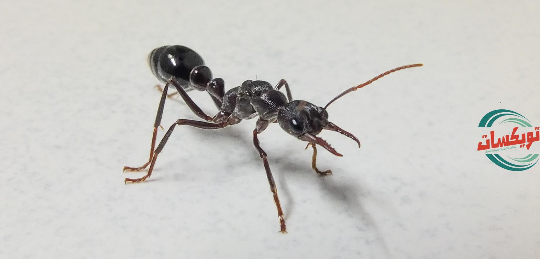 شركة مكافحه حشرات بالقويعية