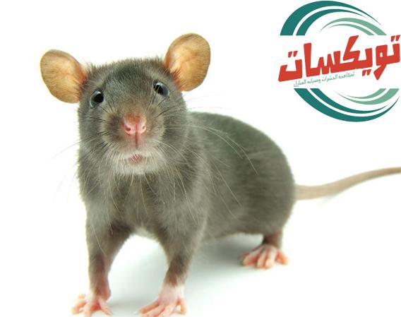 شركة مكافحه الفئران ببيشه