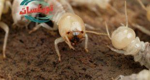 شركة مكافحه النمل الابيض بشرق الرياض