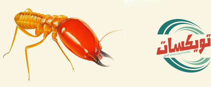 شركة مكافحه النمل الابيض بالقويعية