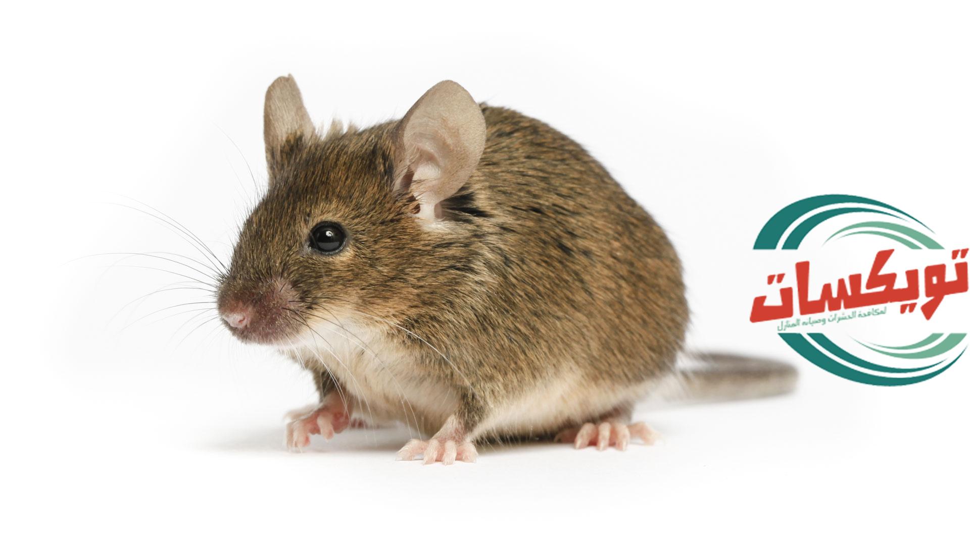 شركة مكافحه الفئران بالقويعية