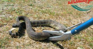 شركة مكافحه الثعابين بالقويعية