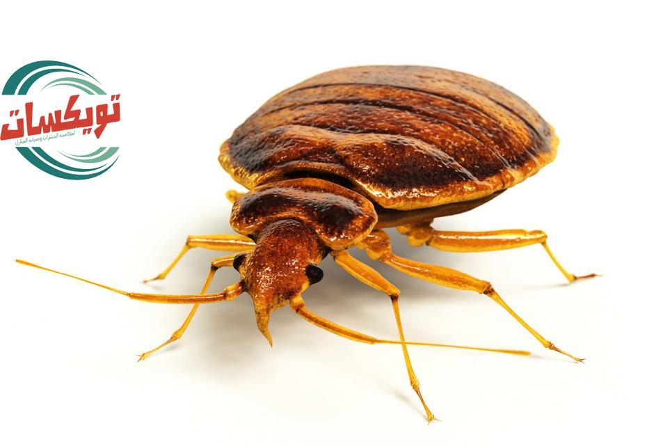 Photo of شركة مكافحه بق الفراش بالقويعية