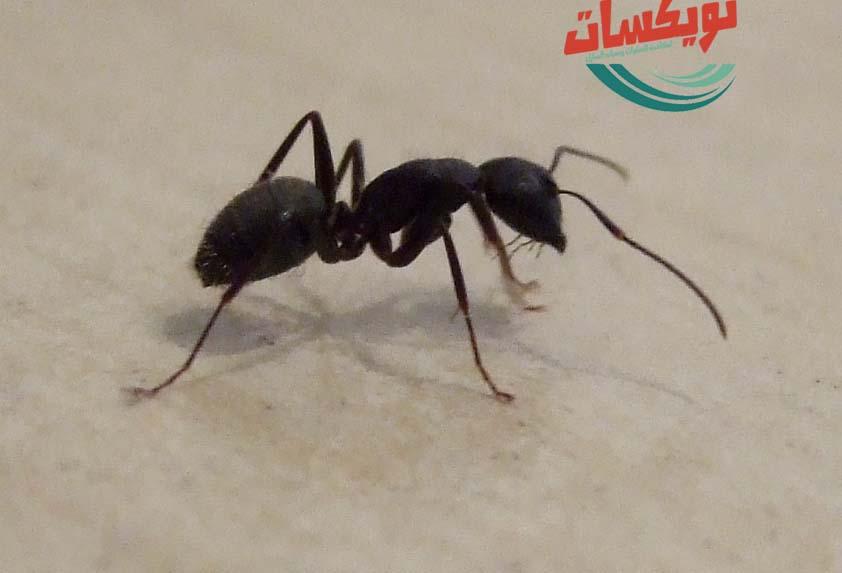شركة مكافحه حشرات بشمال الرياض