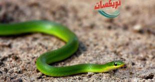 شركة مكافحه الثعابين بجنوب الرياض