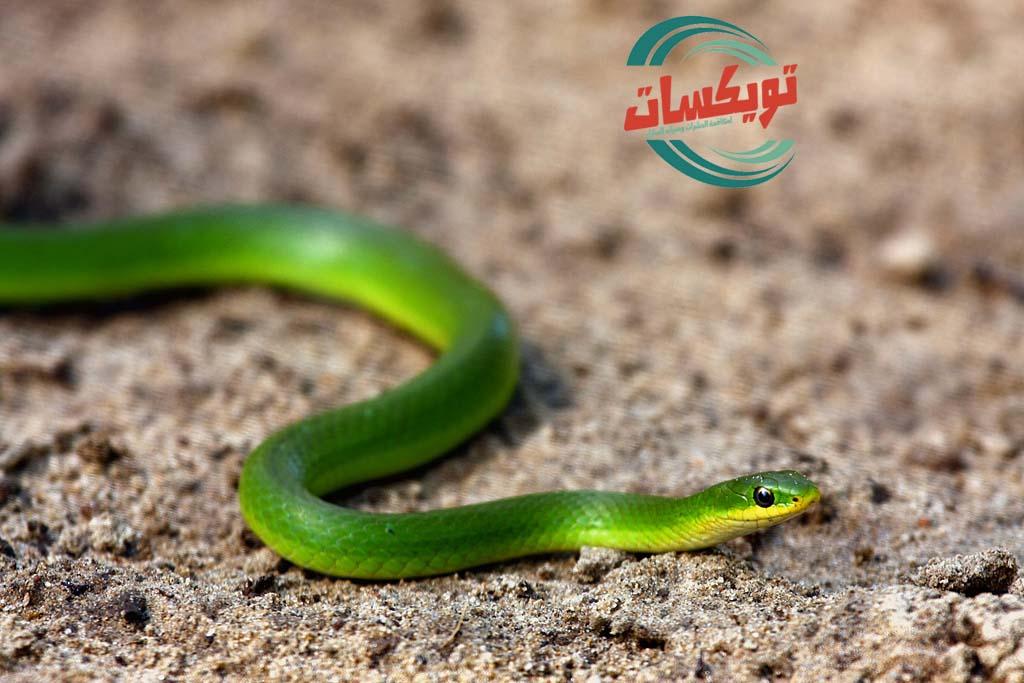 Photo of شركة مكافحه الثعابين بجنوب الرياض