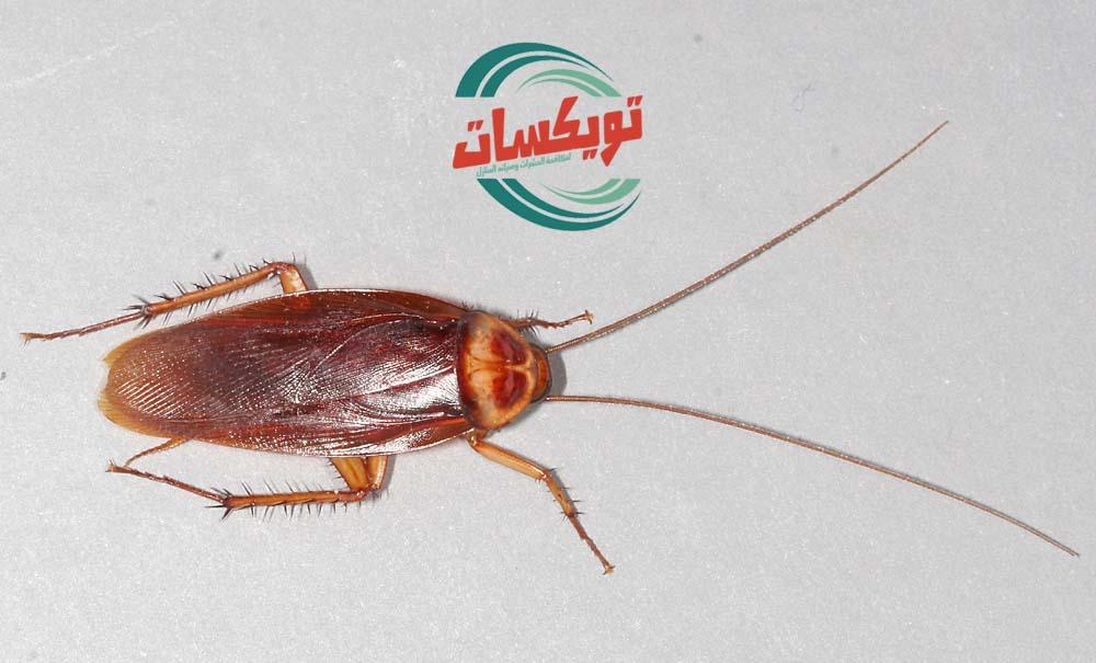 Photo of شركة مكافحه الصراصير بالمزاحمية