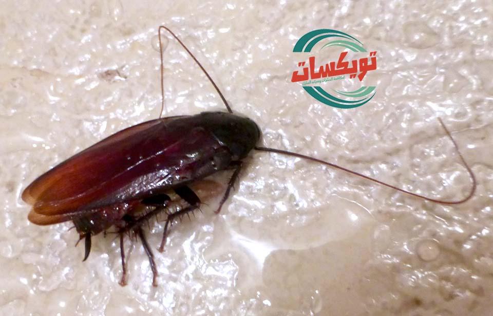 Photo of شركة مكافحه حشرات بشرق الرياض