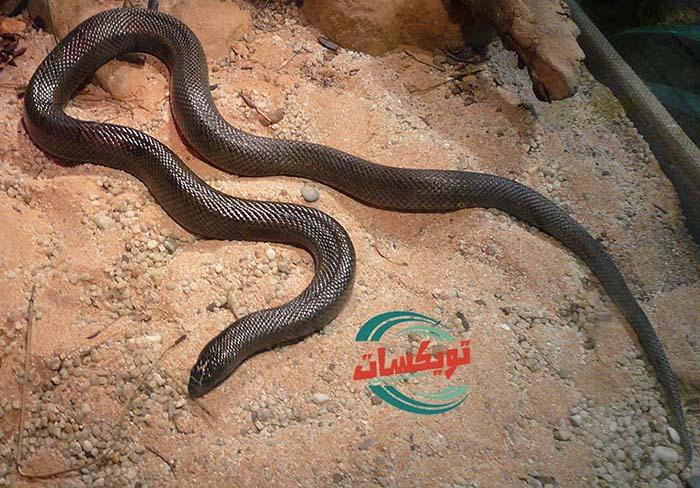 شركة مكافحه الثعابين بشمال الرياض