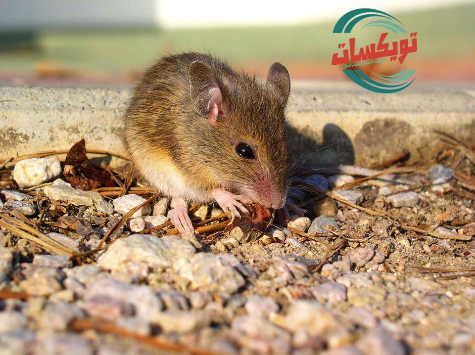Photo of شركة مكافحه الفئران بالمزاحمية